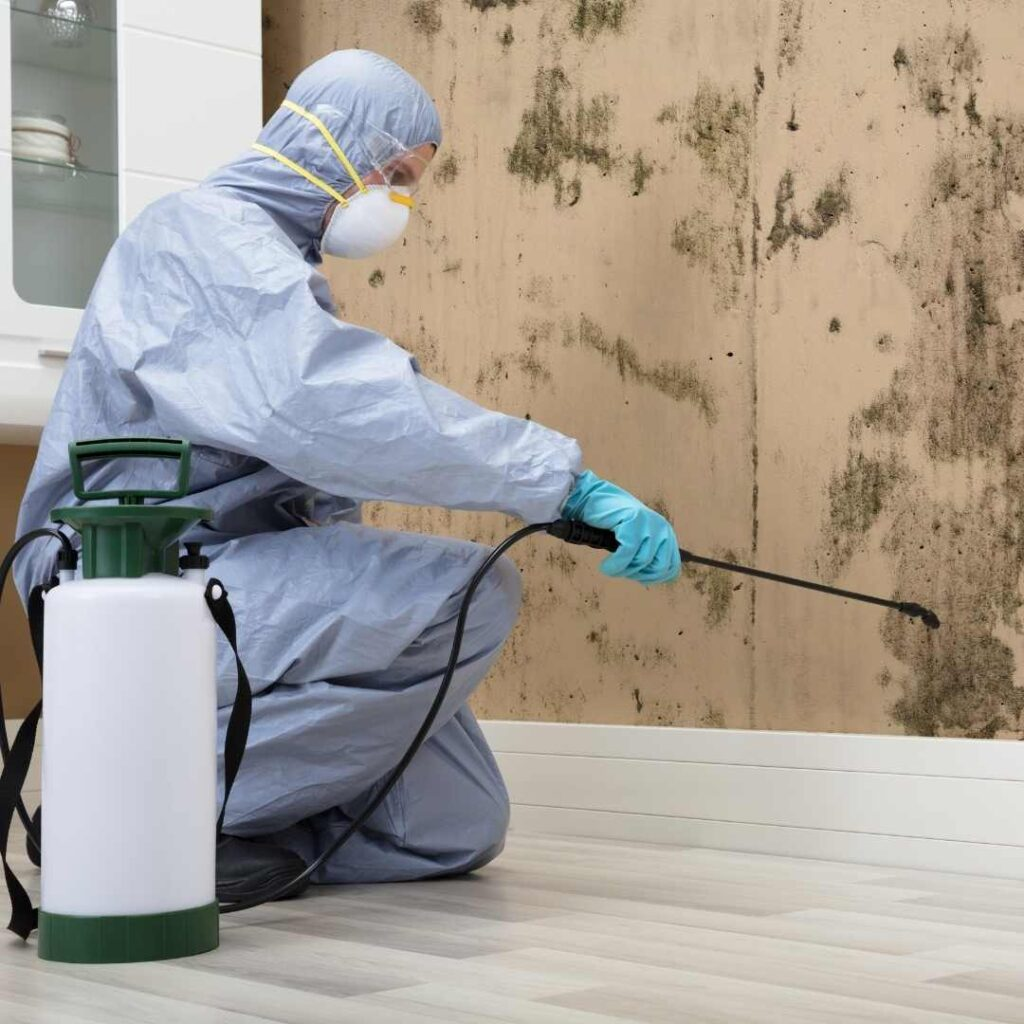 pest control service in thane